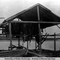 Salmon drying 1:30 A.M., Beaver, Alaska, 1927