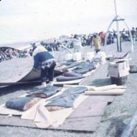 Muktuk, Point Hope whaling festival, 1968.